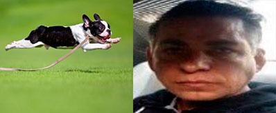 perrito-corriendo-asesino