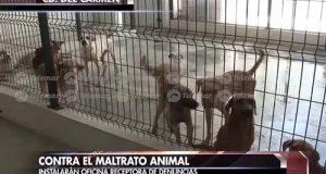 maltrato animal