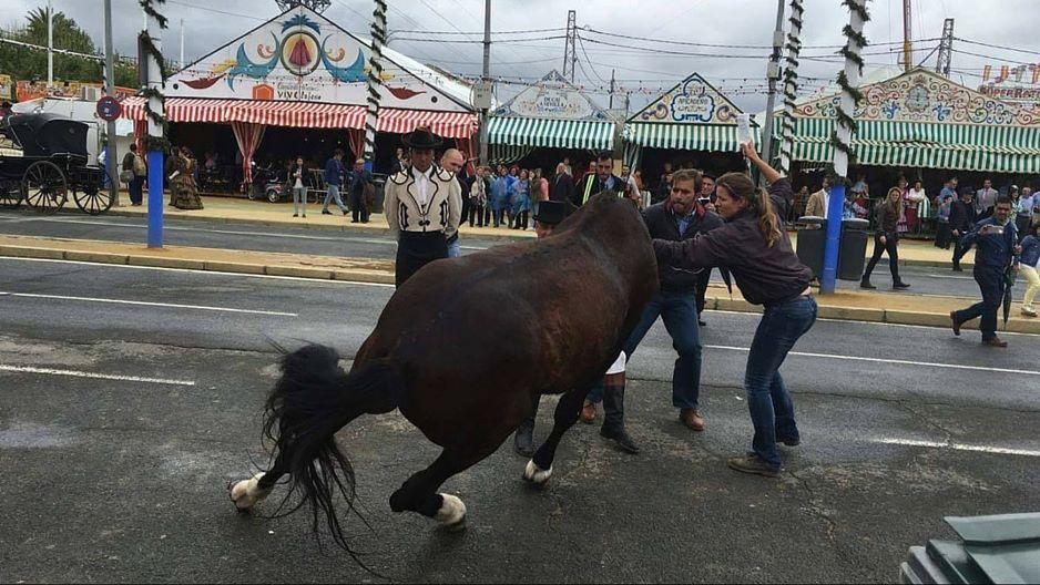 caballo rendido 2