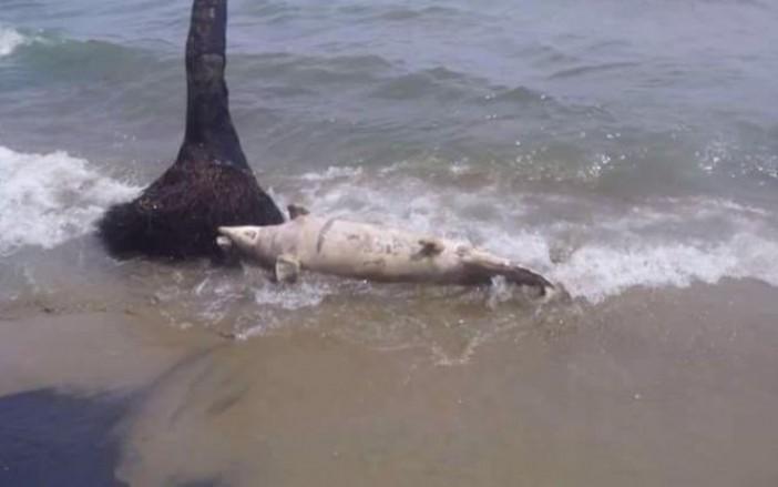 delfin muerto