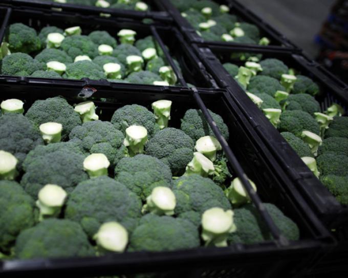 alimentos-contra-cancer-brocoli