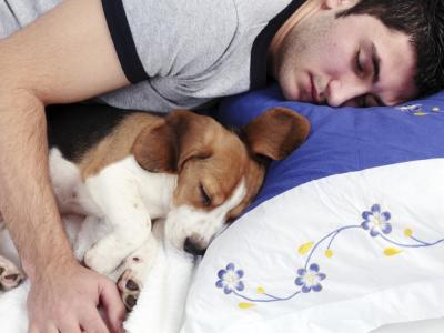 dormir-perro_0