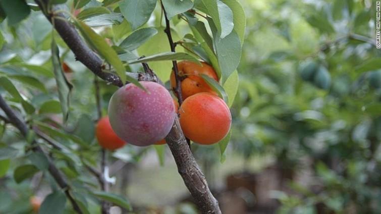 arbol-macgic