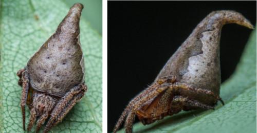 gryffindor-spider