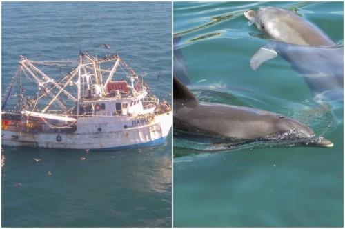 vaquita_marina_delfines